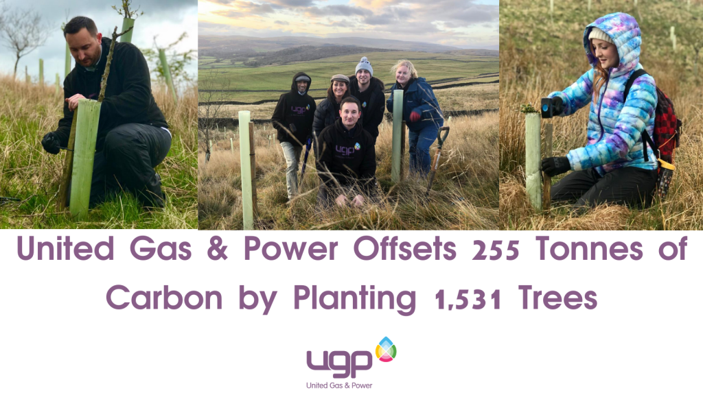 United Gas & Power Offsets 255 Tonnes of Carbon by Planting 1,531 Trees